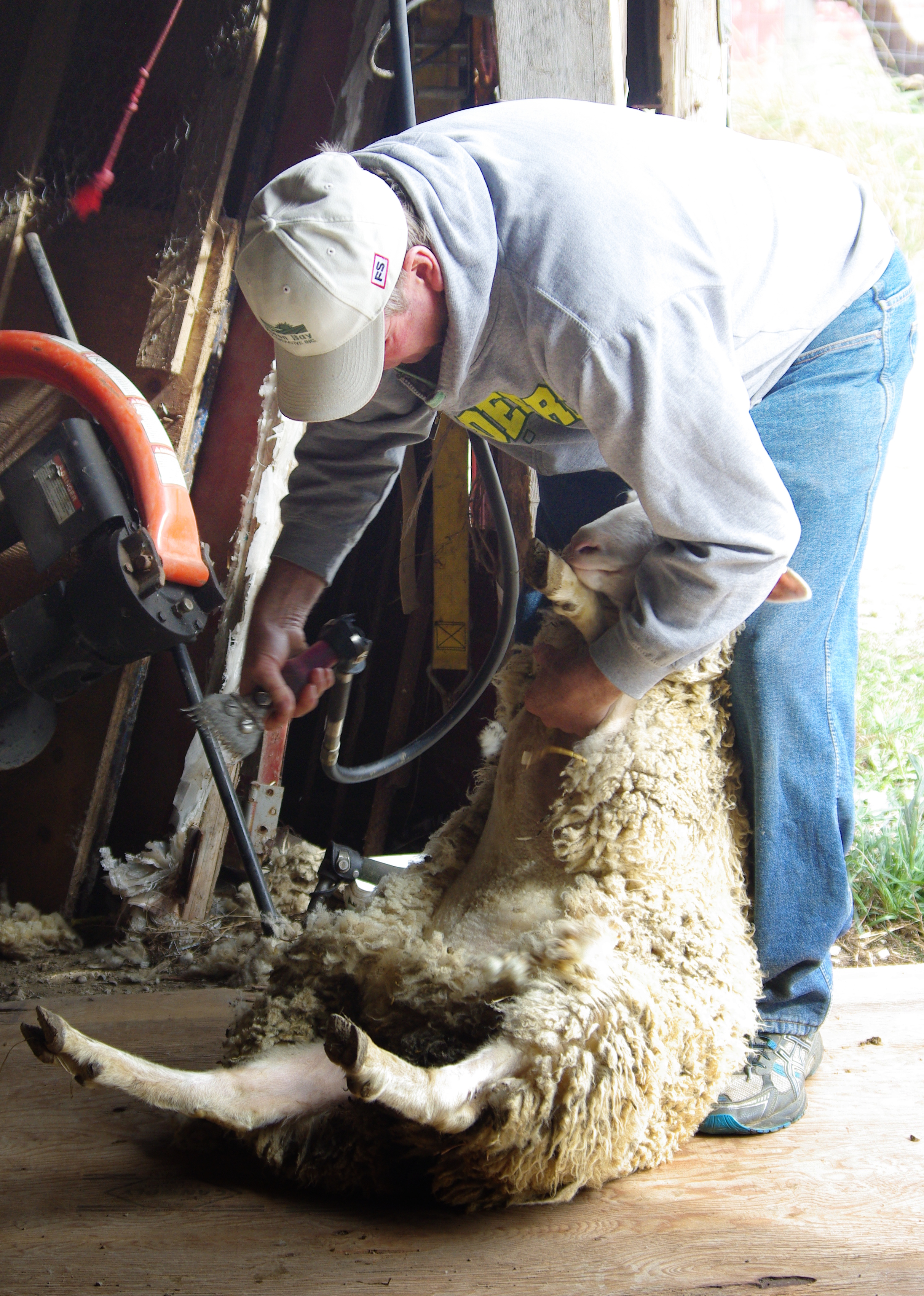 Dufferin Sheep Farmer